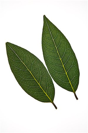 Fresh Bay Leaves on White Stock Photo - Premium Royalty-Free, Code: 621-06304424