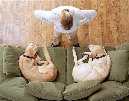 Disciplining Dogs Indoors Stock Photo - Premium Royalty-Free, Code: 621-00788123