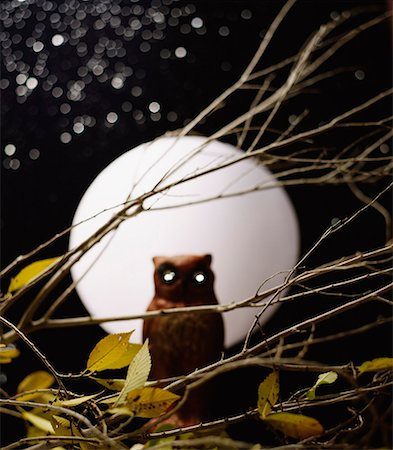 Owl with moon and stars Stock Photo - Premium Royalty-Free, Code: 621-02027636