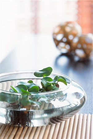 potted plant - Glass Bowl As Plant Pot Stock Photo - Premium Royalty-Free, Code: 622-06009550
