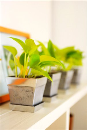 potted plant - Potted Plants In A Row Set On Shelf Stock Photo - Premium Royalty-Free, Code: 622-06009581