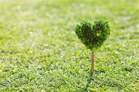 shadow - Heart Shape Tree In Grassy Field Stock Photo - Premium Royalty-Free, Code: 622-06163867