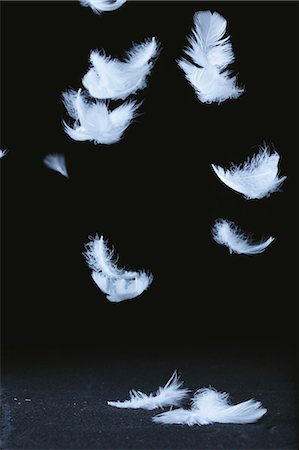 fragile - White Feathers Flying Against Black Background Stock Photo - Premium Royalty-Free, Code: 622-06163888
