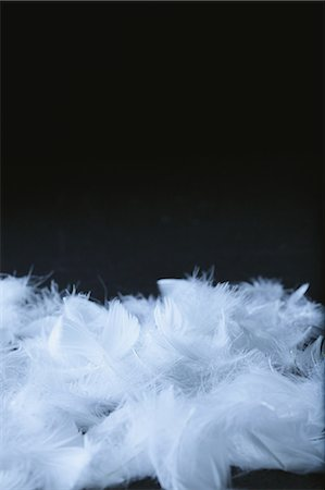 feather  close-up - Close Up Of Feathers Stock Photo - Premium Royalty-Free, Code: 622-06163889