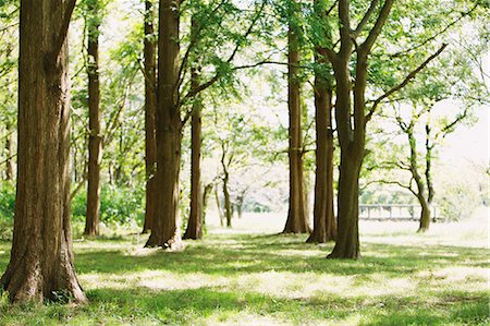 property release - Trees In Park Stock Photo - Premium Royalty-Free, Code: 622-06163913