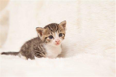 Cat Looking Away Stock Photo - Premium Royalty-Free, Code: 622-06190677
