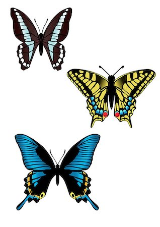 Close Up Of Multicolored Butterflies Stock Photo - Premium Royalty-Free, Code: 622-06190953