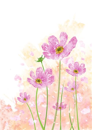 pretty background designs - Pink Flowers Stock Photo - Premium Royalty-Free, Code: 622-06191008