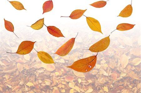 Floating Autumn Leaves Stock Photo - Premium Royalty-Free, Code: 622-06191074