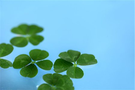 Bright Four Leaf Clover On Blue Background Stock Photo - Premium Royalty-Free, Code: 622-06191206