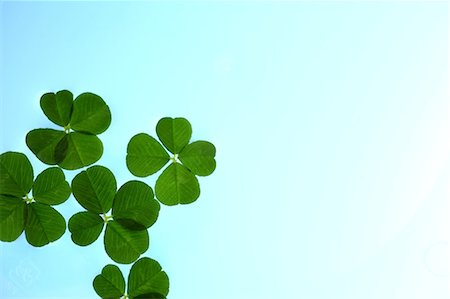 Bright Four Leaf Clover On Blue Gradient Background Stock Photo - Premium Royalty-Free, Code: 622-06191202