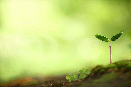 Sapling, New Life Stock Photo - Premium Royalty-Free, Image code: 622-06191229
