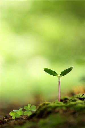 sprout - Sapling, New Plant Stock Photo - Premium Royalty-Free, Code: 622-06191230