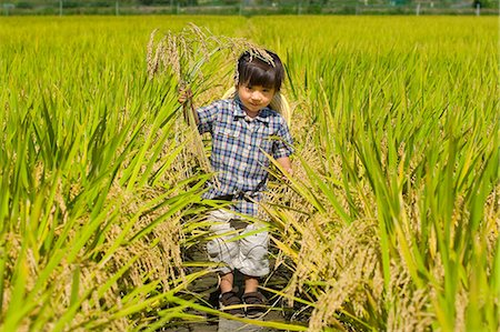 Children walking in a rice field Stock Photo - Premium Royalty-Free, Code: 622-06369639