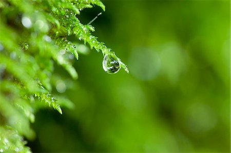 Drop on green leaf Stock Photo - Premium Royalty-Free, Code: 622-06369877