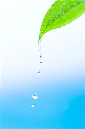 Water drop on green leaf Stock Photo - Premium Royalty-Free, Code: 622-06369911
