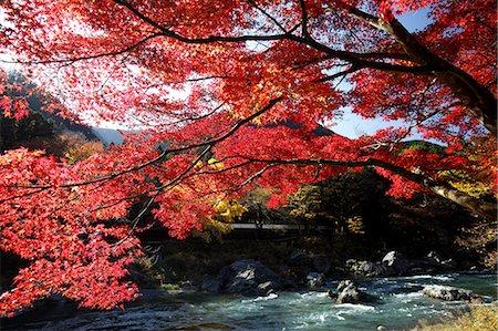 Autumn leaves Stock Photo - Premium Royalty-Free, Code: 622-06487759