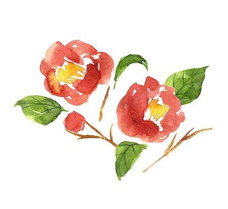 Camellia illustration Stock Photo - Premium Royalty-Free, Code: 622-06487856