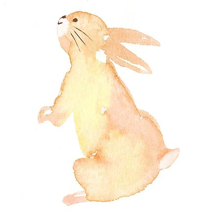 Rabbit illustration Stock Photo - Premium Royalty-Free, Code: 622-06487853