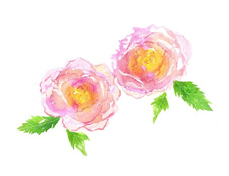 peony illustrations - Peony illustration Stock Photo - Premium Royalty-Free, Code: 622-06487866