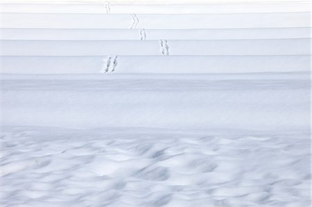 Traces in snow Stock Photo - Premium Royalty-Free, Code: 622-06548749