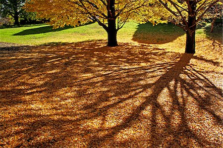 shadow - Tree shadows and yellow leaves Stock Photo - Premium Royalty-Free, Code: 622-06549158