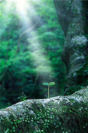 shower - Green leaf Stock Photo - Premium Royalty-Free, Code: 622-06549361