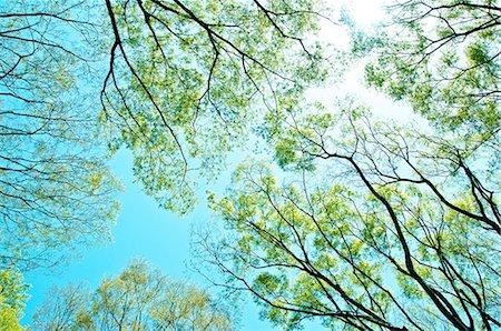 Trees and sunlight Stock Photo - Premium Royalty-Free, Code: 622-06549405