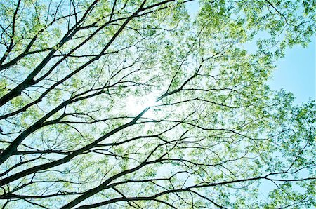 Trees and sunlight Stock Photo - Premium Royalty-Free, Code: 622-06549403