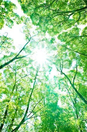 Trees and sunlight Stock Photo - Premium Royalty-Free, Code: 622-06549414