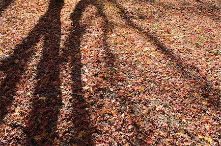 shadow - Tree shadows on the ground Stock Photo - Premium Royalty-Free, Code: 622-06549427