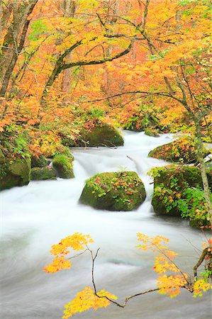 Oirase mountain stream, Aomori Prefecture Stock Photo - Premium Royalty-Free, Code: 622-06809543