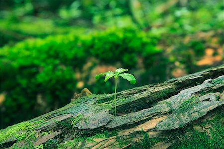 Green leaves and moss Stock Photo - Premium Royalty-Free, Code: 622-06809726