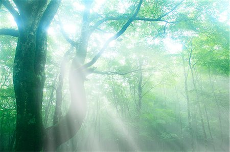 fantastically - Trees in the fog Stock Photo - Premium Royalty-Free, Code: 622-06809738