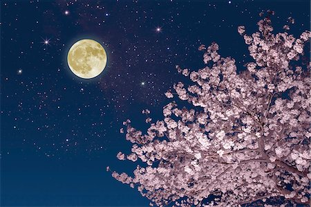 spring - Moon stars and cherry blossoms Stock Photo - Premium Royalty-Free, Code: 622-06842080