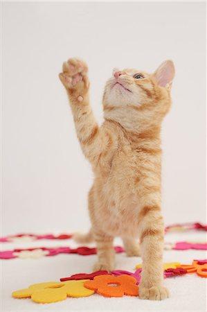 Cat Stock Photo - Premium Royalty-Free, Code: 622-06842152