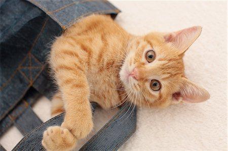 Cat Stock Photo - Premium Royalty-Free, Code: 622-06842175