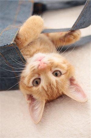 Cat Stock Photo - Premium Royalty-Free, Code: 622-06842176