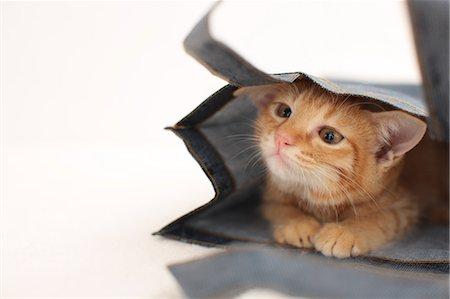 Cat Stock Photo - Premium Royalty-Free, Code: 622-06842173