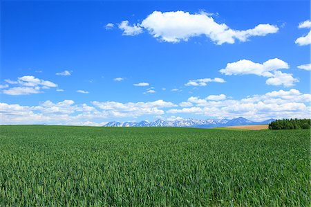 Wheat field and blue sky with clouds, Hokkaido Stock Photo - Premium Royalty-Free, Code: 622-06842383