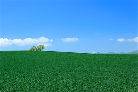 earth no people - Wheat field trees and sky, Hokkaido Stock Photo - Premium Royalty-Free, Code: 622-06842402