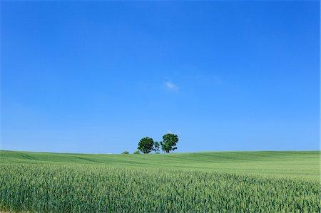 Grassland trees and blue sky, Hokkaido Stock Photo - Premium Royalty-Free, Code: 622-06842456