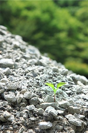 sprout - Green leaf sprouting from gravel Stock Photo - Premium Royalty-Free, Code: 622-06842621