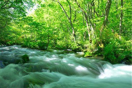 Oirase mountain stream, Aomori Prefecture Stock Photo - Premium Royalty-Free, Code: 622-06900220