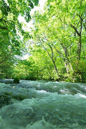 Oirase mountain stream, Aomori Prefecture Stock Photo - Premium Royalty-Free, Code: 622-06900232