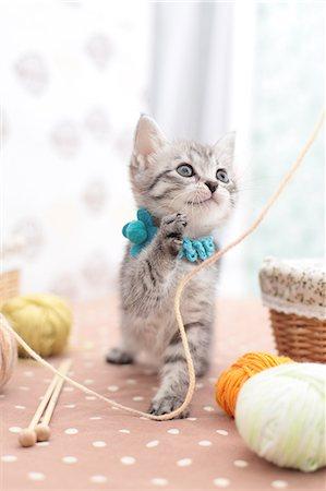 Mixed breed cat Stock Photo - Premium Royalty-Free, Code: 622-06900388