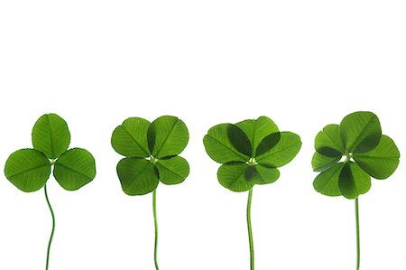 Clover Stock Photo - Premium Royalty-Free, Code: 622-06900507