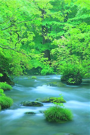 Oirase Mountain Stream, Aomori Prefecture Stock Photo - Premium Royalty-Free, Code: 622-06900596