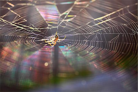 fantastically - Spider and web Stock Photo - Premium Royalty-Free, Code: 622-07108846