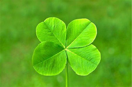 spring - Four-leaf clover Stock Photo - Premium Royalty-Free, Code: 622-07108925